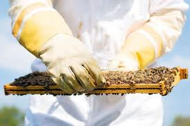 Cover photo for How to Become a Beekeeper