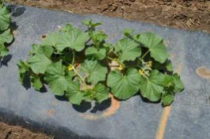 Cover photo for Organic Vegetable Gardening