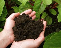 Cover photo for Free Shipping on Soil Samples