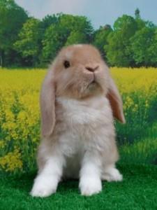 Showing Rabbits