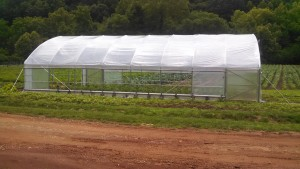 The high tunnel project in Marble North Carolina was developed to assist farmers and potential farmers to learn growing practices in the high tunnel structures.
