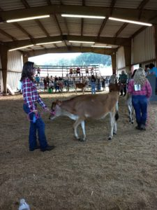 Cover photo for Bunnies, Bovines, & Birds 4-H Club Attends Fair