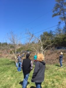 Cover photo for Fruit Tree Pruning Workshop