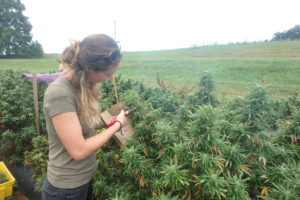 Cover photo for Hemp Law 101: The Regulation of Industrial Hemp