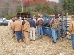 Cover photo for Live Cattle Chute Demonstrations