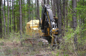 Cover photo for Lunch and Learn Webinars for Forest Landowners