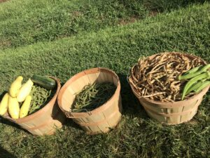 Cover photo for Vegetable Garden Classes